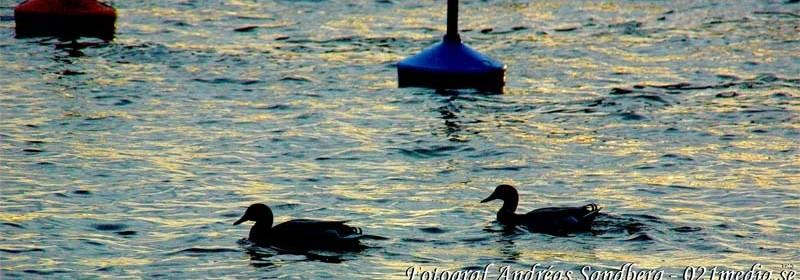 Foto: 021media.se/ARKIVBILD